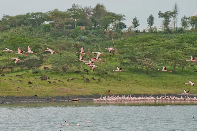 spot Lesser flamingos with Allen Tanzania Safaris