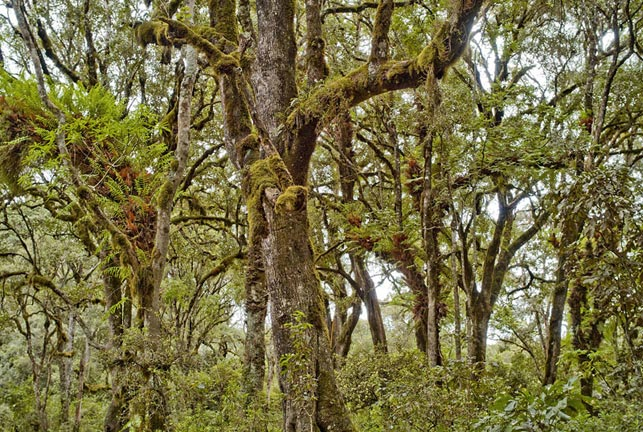 spot mystic forests with Allen Tanzania Safaris