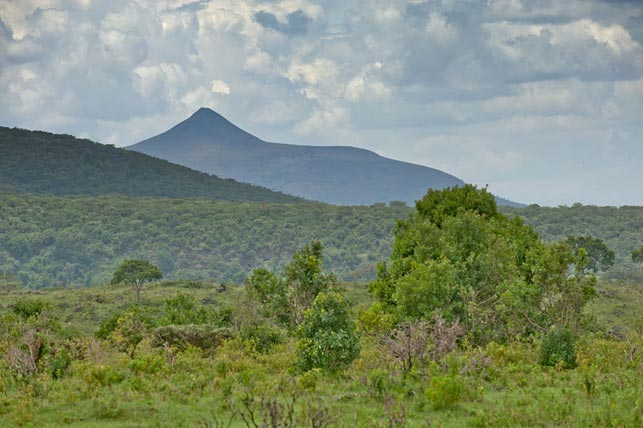 spot mount longido with Allen Tanzania Safaris