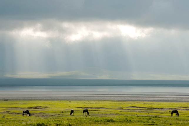 enjoy the sunset and wildebeast at ngorongoro crater with allen tanzania safaris