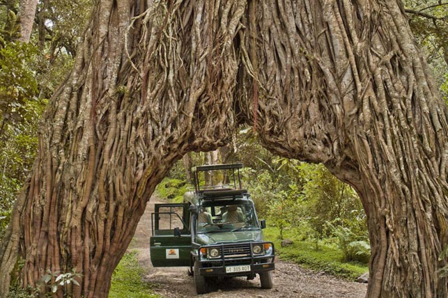 spot with Allen Tanzania Safaris