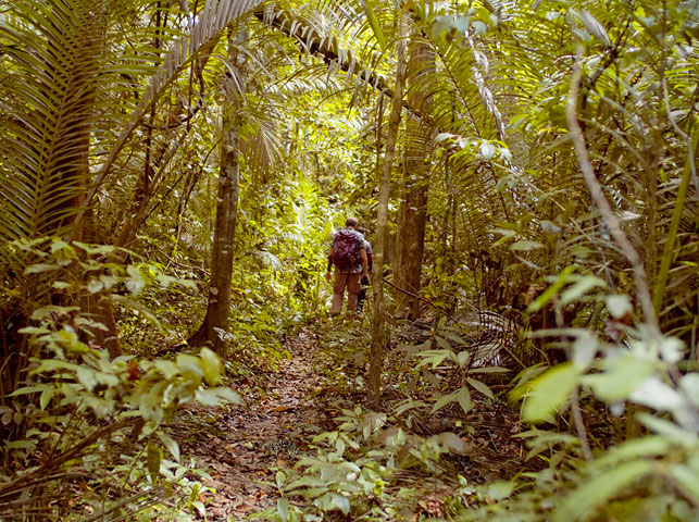 pass through tropical rainforests on pemba island with allan tanzania safaris